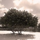 South Beach Tree by erinv2000