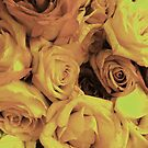 Rose Roses Roses by erinv2000