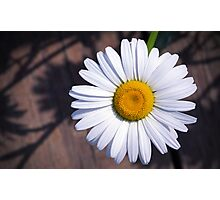 Daisy and the shadows Photographic Print