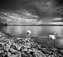 Swan Lake by redtree