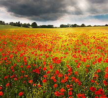 Field of Dreams by redtree