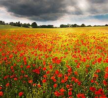 Field of Dreams by redtree