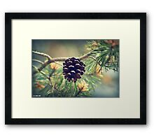 Pinecone waiting to drop Framed Print