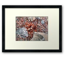 ©BS-MS Anthill Framed Print