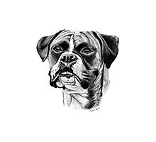 The playful Boxer dog. Photographic Print