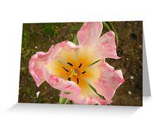 Flower Close-Up, Lower Manhattan, New York City Greeting Card