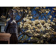 Hail My Lady of Dogwoods Photographic Print