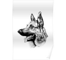 German Shepherd dog. Poster
