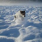 Milo and the crazy deep snow by themadsaint