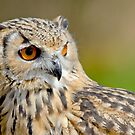 Bengal Eagle Owl by M.S. Photography/Art