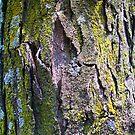 Bark by erinv2000