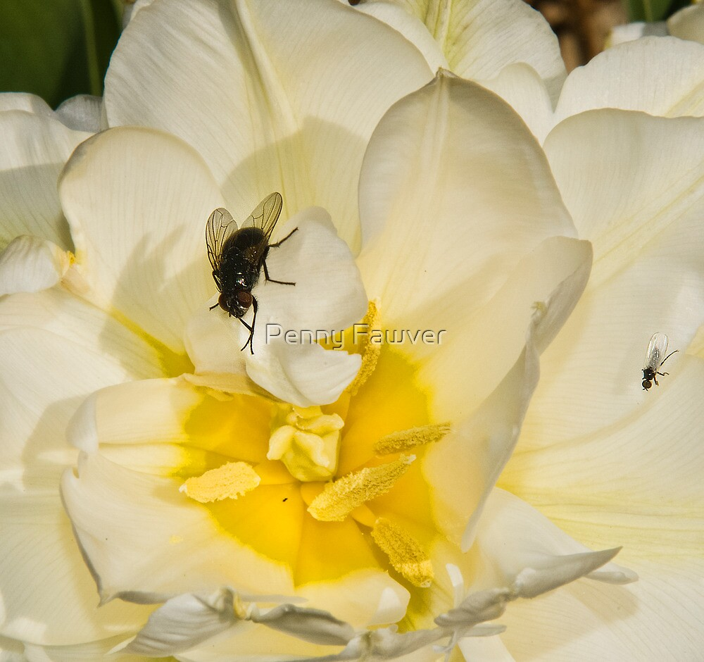 Macro flower and fly by Penny Rinker