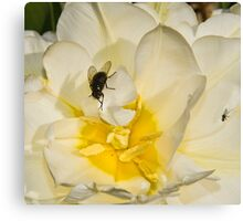 Macro flower and fly Canvas Print