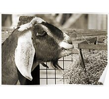 Whats got your Goat? Poster