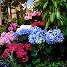 flower shop  by bron stadheim