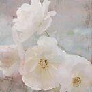 Winter White by Lynn Starner