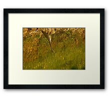 Abstract on the Pond Framed Print