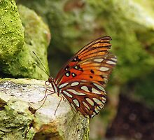 Butterfly by DMBell