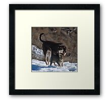 silly animals... Framed Print