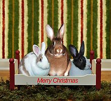Bunnies At Christmas by DMBell