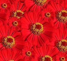 Red to Yellow by Nira Dabush