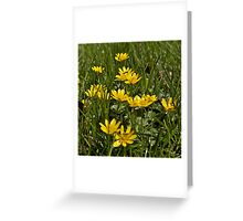 Celandines Greeting Card