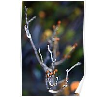 Fagus Abstract Poster