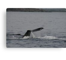Whales in Hawaii Canvas Print