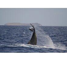 Competing Humpbacks In Hawaii Photographic Print