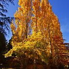 Autumn gold - Mount Macedon by Hans Kawitzki