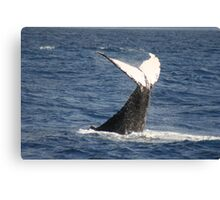Tale Slapping Humpback Canvas Print