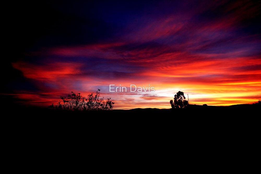 Bemboka Splendor No. 3 by Erin Davis
