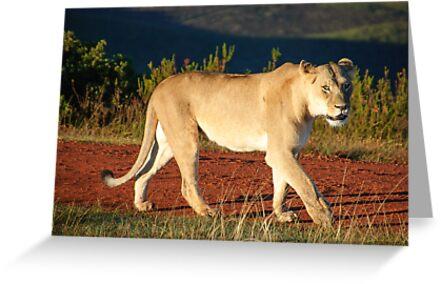 Gondwana Lioness by alanrickman