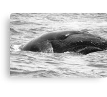 Humpback Whales In Hawaii Canvas Print