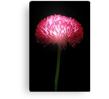 Clover Red Canvas Print