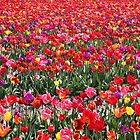 Rainbow Tulip Garden by Jo Nijenhuis