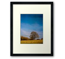 Tree in Field Berkshire England Framed Print