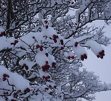 Snow on a tree with berries by Eleanor11