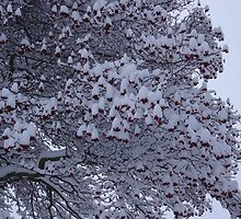 Tree with berries and snow by Eleanor11