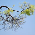 Branching Out by trish725