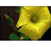 "Said Oxalis the Edible--""I'm Not Afraid of Rain..."" Photographic Print"