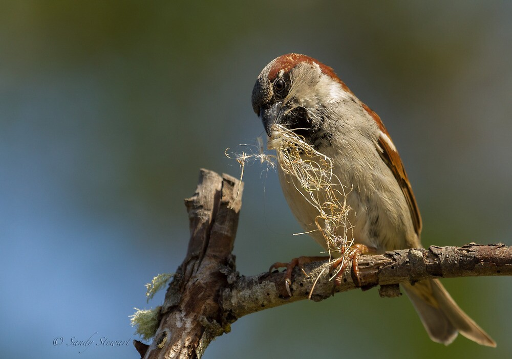 NESTING MATERIAL by Sandy Stewart
