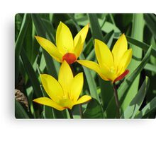 Spring in the Gardens of the World - II Canvas Print