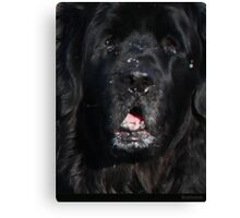 Bottlemutt Canvas Print