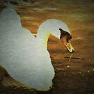 Swan with texture by ♥⊱ B. Randi Bailey