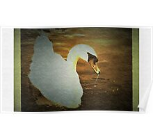 Swan with texture Poster