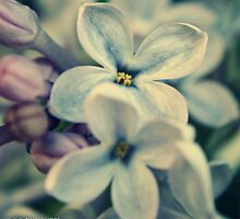 Lilac Blooms by Estell