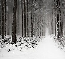 The Path by redtree