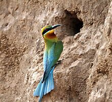 BLUE TAILED GREEN BEE EATER by RAHUL  PANDIT