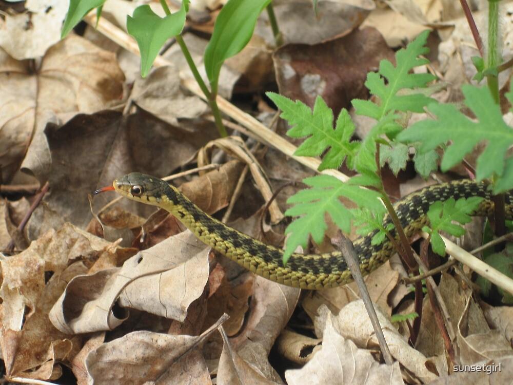 Eastern Garter Snake by sunsetgirl